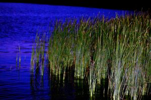 Just some ordinary reeds...... by drewii57