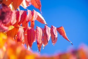 Autumn is a second spring . by Betuwefotograaf