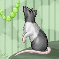 The rat by Tabia