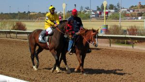 Racehorse Stock 16 by Rejects-Stock