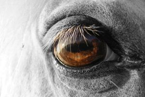 Horse Eye by littleblackcloud91