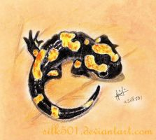 EAP Oct : North African fire salamander by silk501