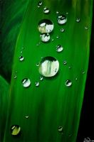 Dewdrops by Dina-n1