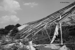 Greenhouse / Gewaechshaus 4 by bluesgrass