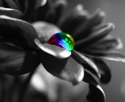 Rainbow flower 2 by mbttdragon