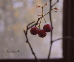 Autumn berries. by Akatamy