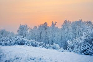 The beauty of winter by Korolevatumana