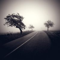 CCXLV. ..in the fog X. by behherit