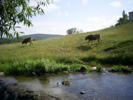 creek and cows by Qebsenuef