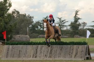 Paint Horse Eventing Cross Country by HorseStockPhotos