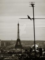 Eiffel and the Pidgeon by NightstreetDreamer