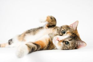 Lounging cat by Danwhitedesigns