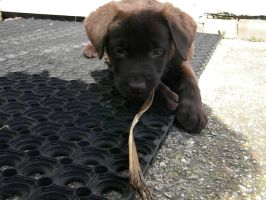 Puppy and the STICK by bulletsurroundme