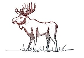 Moose sketch by TheLoobster