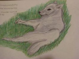 wolf lying on grass by allanimerules1