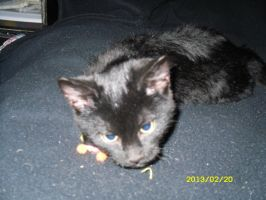 Sylvester uses cat toy as pillow by GeneralDurandal