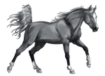 Horse Greyscale 01 by BLACKNIGHTINGALE81