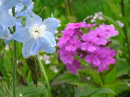 Delphinium and phlox by crazygardener