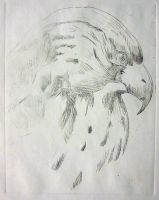 Falcon Etch by aaronprovost