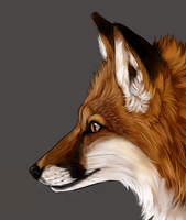 Fox WIP by sugarpoultry