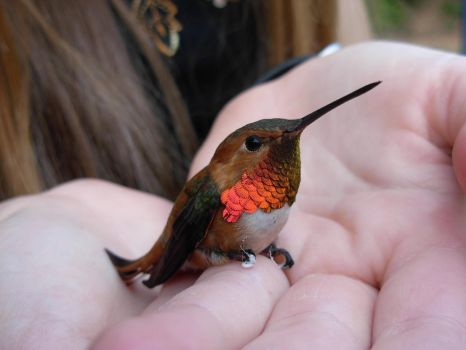 Hummingbird by Selkey