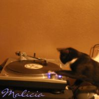 My cat rocks the turntables by maliciaZintent
