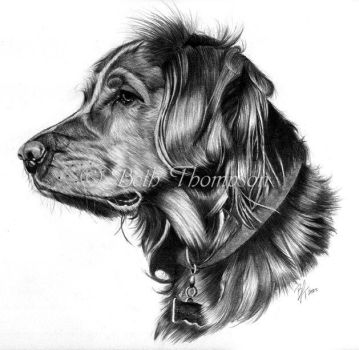 Retriever by bjt