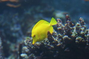 Yellow Fish by SmellsLikeDookie