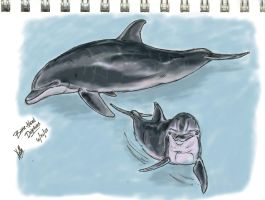 Bottle-Nosed Dolphins by autumnalangel