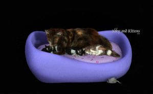 Abby and Kittens by Dani3D