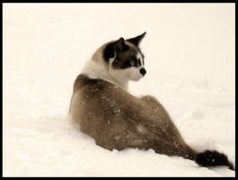 Snow Kitty. by ReinbowSparkles
