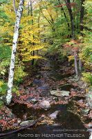 Autumn Stream by HeatherTelesca