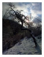The same old tree by calin-red