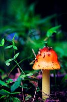 Just a Mushroom by JustBePhotos