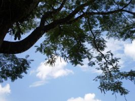 Tree Touches Sky by chrysrawr