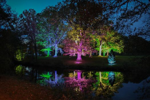 Magic forest at Nossan light festival by JonnyEklund