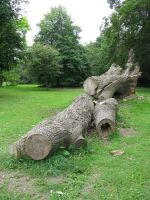 Nature 235 tree trunk by Dreamcatcher-stock