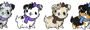 5 Points Border Collie Adoptables by Bc-Gunicord