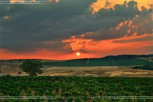Vineyard sun rise by Hdrpoint