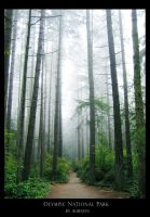 Olympic National Park 02 by photoaurnien