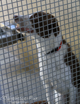 East Valley Animal Shelter 4 by Deliquesce-Flux