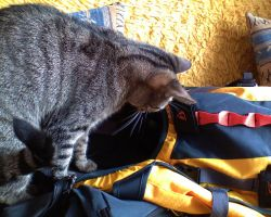 Rucksack1 by Woolfred