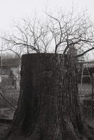 trunk and branches by gangstergazelle