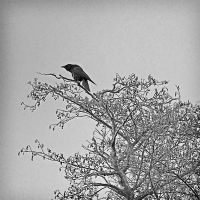 Crow 0144 by filmwaster