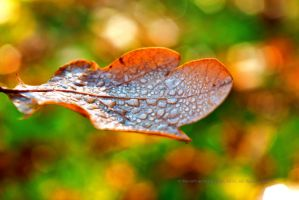 Autum Leaf in Dew Drops IV by MoonPriestessLaguz