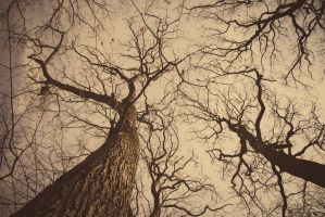 Here comes the trees by Cabbel