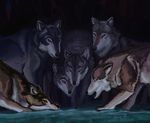 wolveses cropped by HickleStine