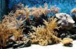 Various 57 - yellow coral by Momotte2stocks
