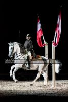 Spanish Riding School 30 by JullelinPhotography