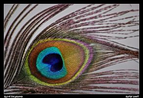 Eye of the Peacock by carterr